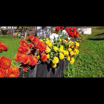 cvijece_ograda