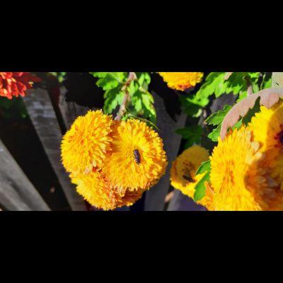 cvijet_baja_