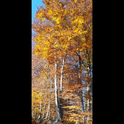 drvo_